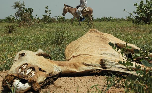 Sahel region this DROUGHTSahel Drought