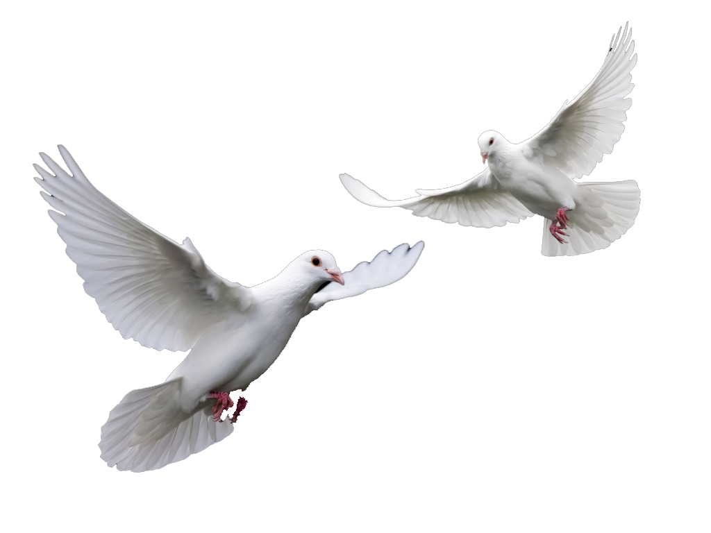 White Dove Flying Png