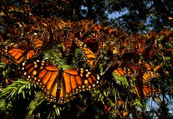 wings of life-gallery2