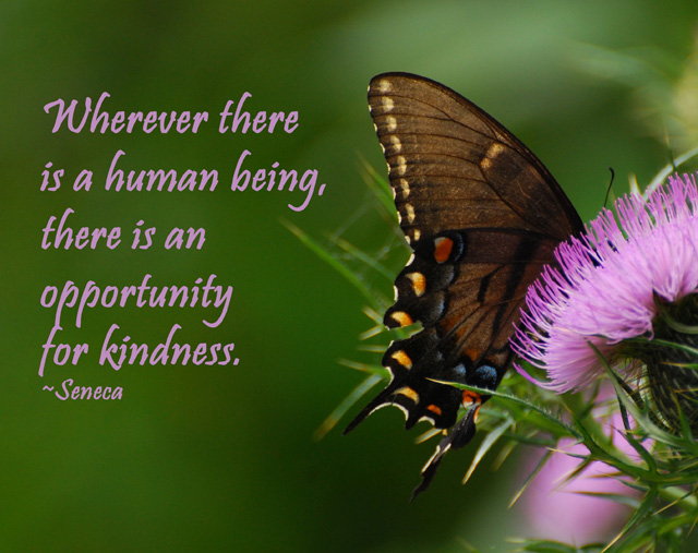 Butterfly - opportunity for kindness -  #062 4NC 08-25-09