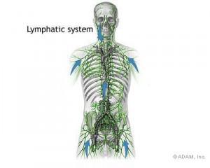 LYMPHOMA SYSTEM