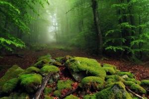 divine love forest magic