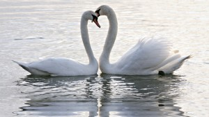 romantic-birds-couples-hd-wallpapers