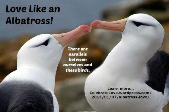 albatrosslove