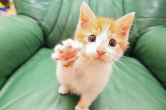 l-High-five-me